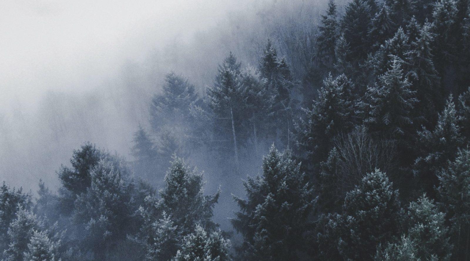 Trädtoppar tittar fram genom dimma