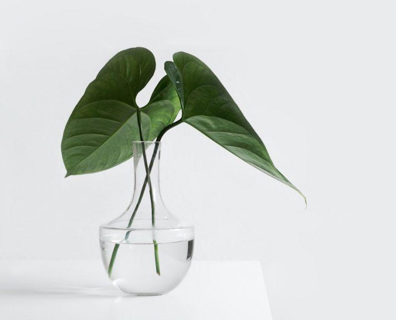 Gröna blad i en glasvas med vatten