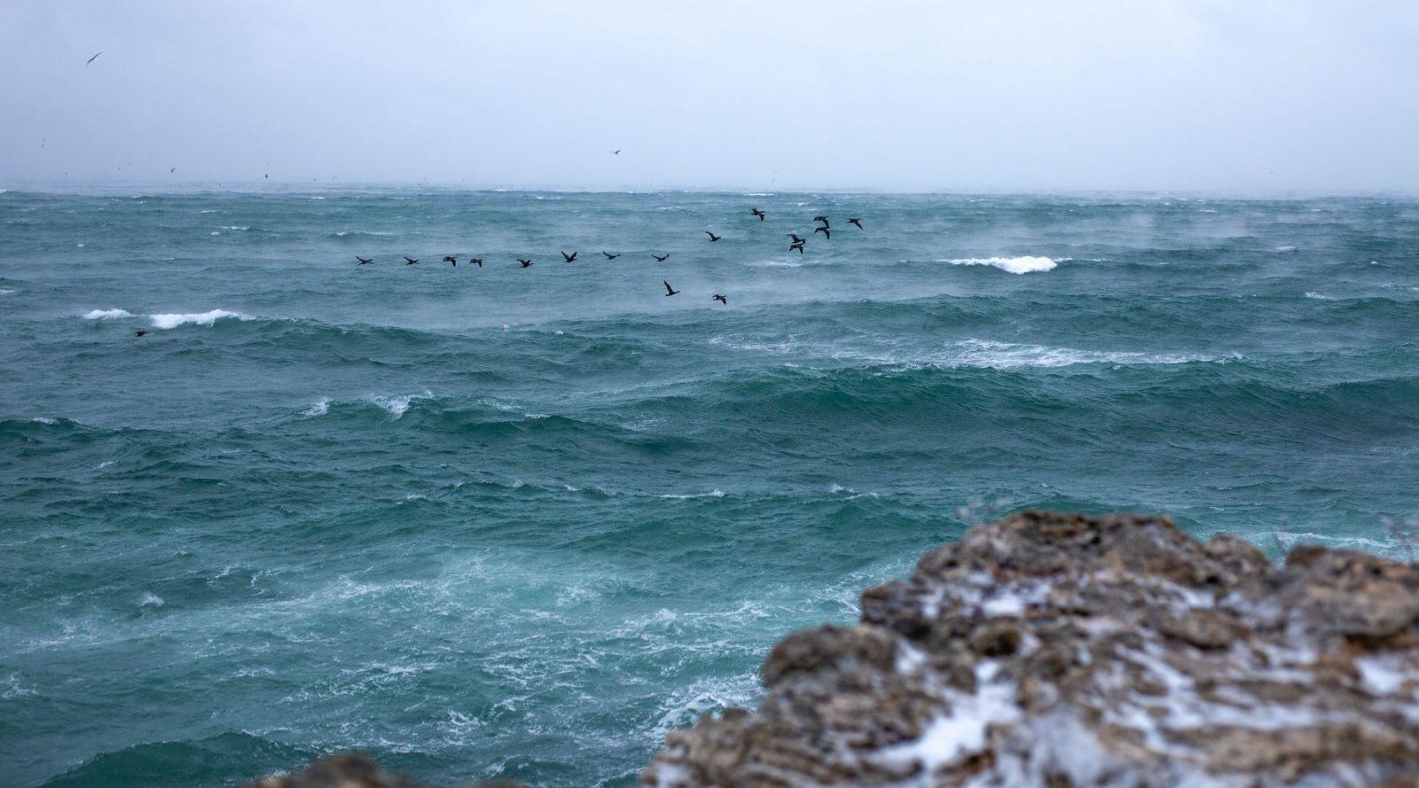 Vågor på havet med fåglar som flyger